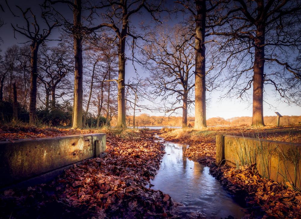Richond-Park.jpg