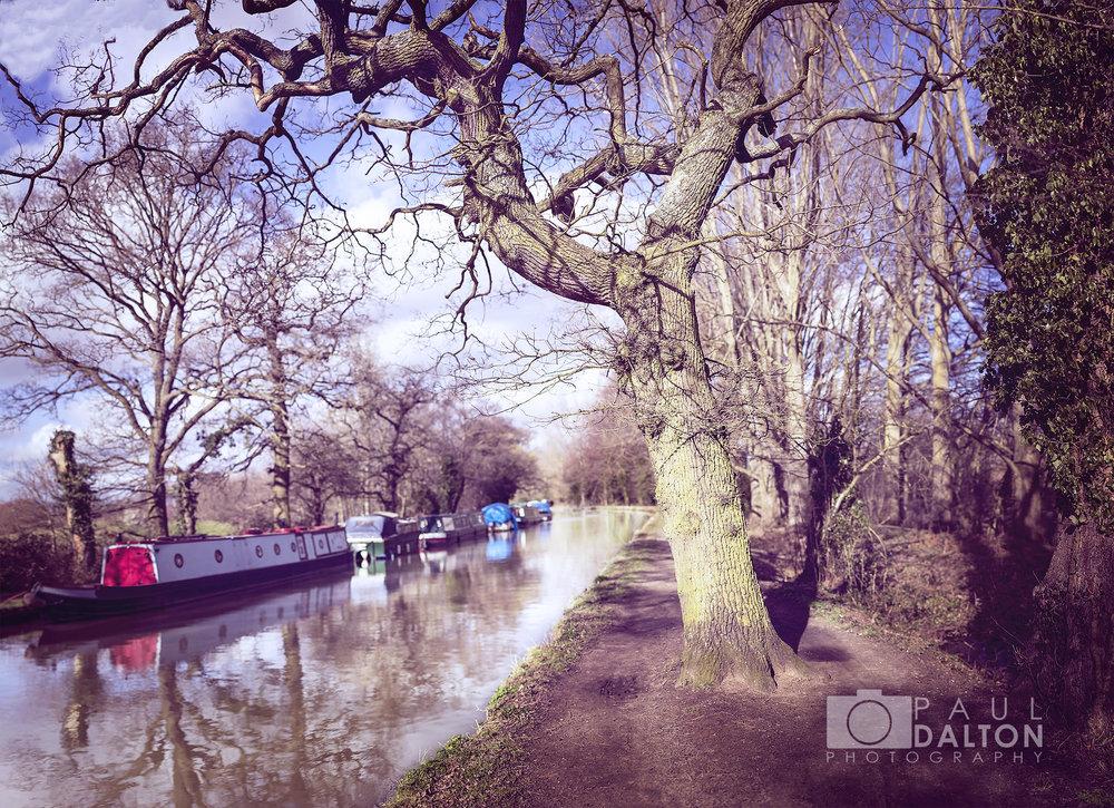 Tree Canal.jpg