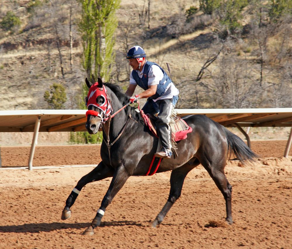 Horses On Track 2014 2.jpg