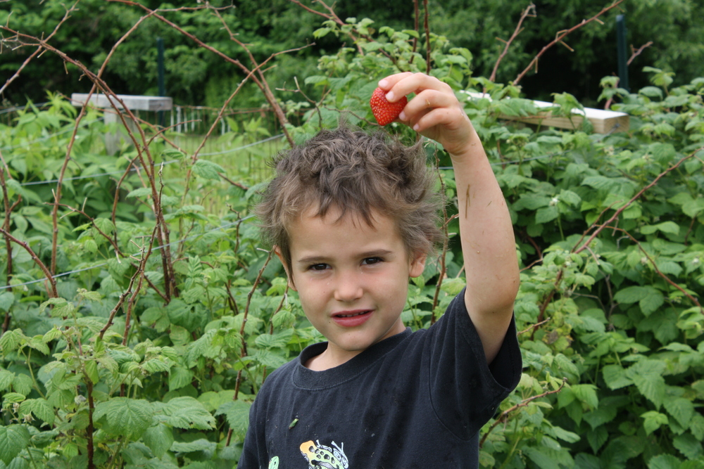 Our first ripe strawberry
