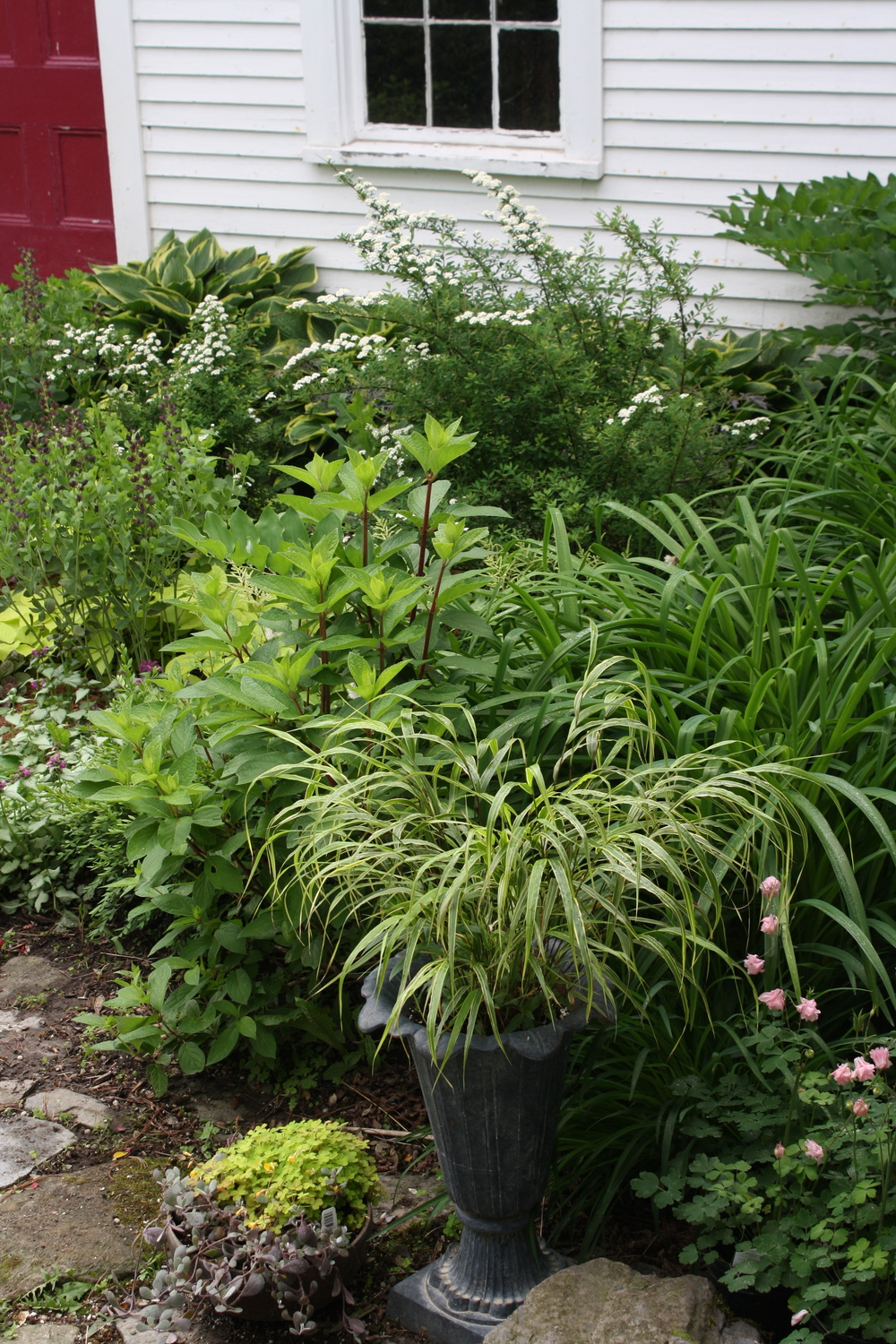 Pots of Hakonechloa and 'Molten Lava' Oxalis provide texture and an extra pop of color out front.