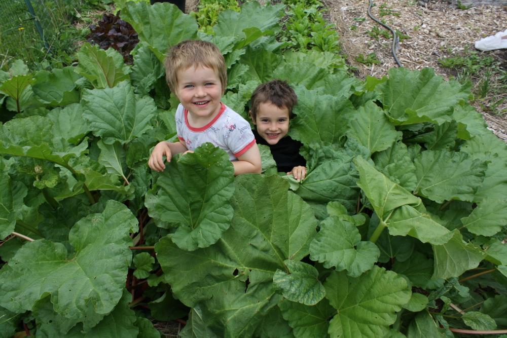 Rhubarb Patch kids
