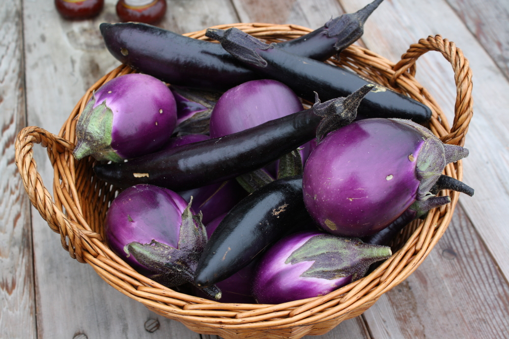 final eggplant harvest just in the nick of time