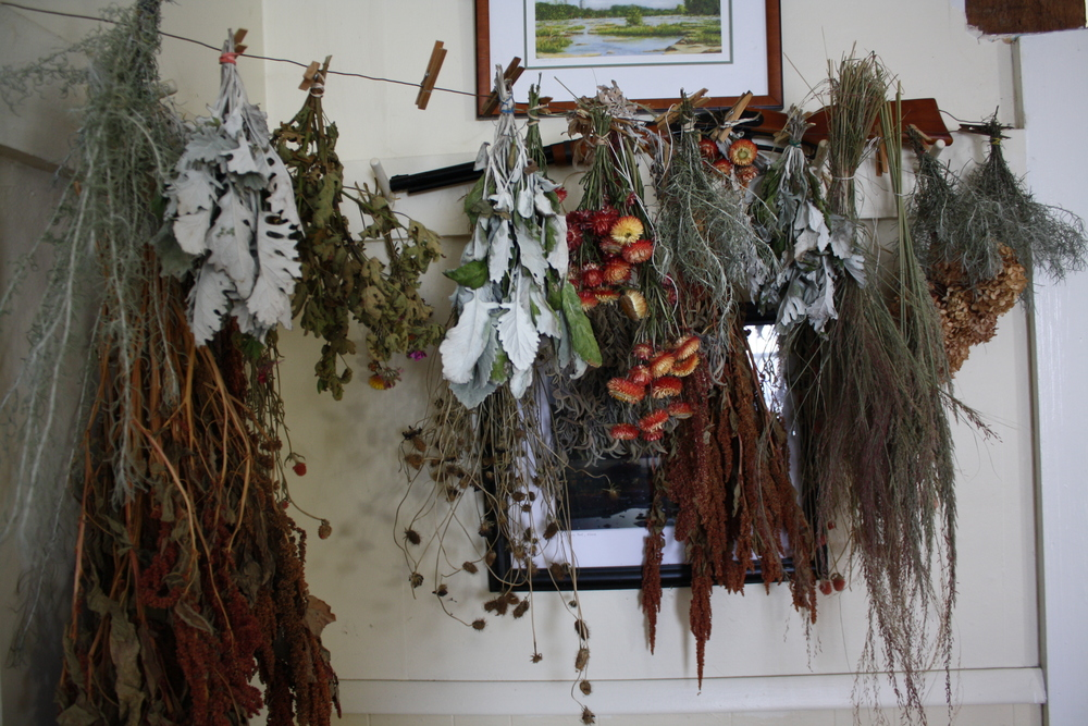 Amaranth, dusty miller, hydrangea, grasses, and herbs drying indoors near woodstove