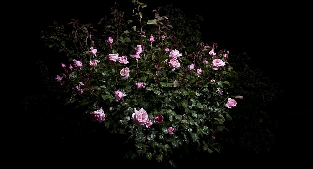 roser2.jpg