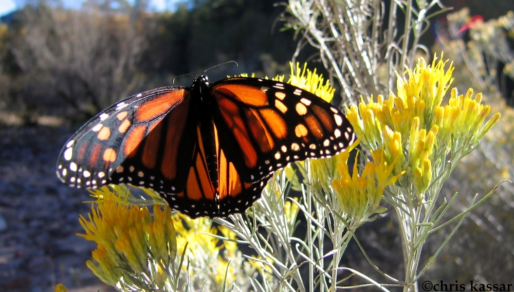 butterfly_NM.jpg