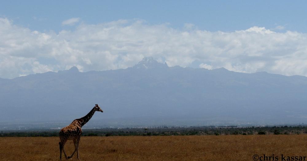 giraffe_mt_kenya.jpg