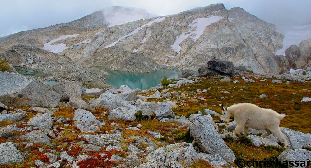 goats_enchantments_WA (1).jpg