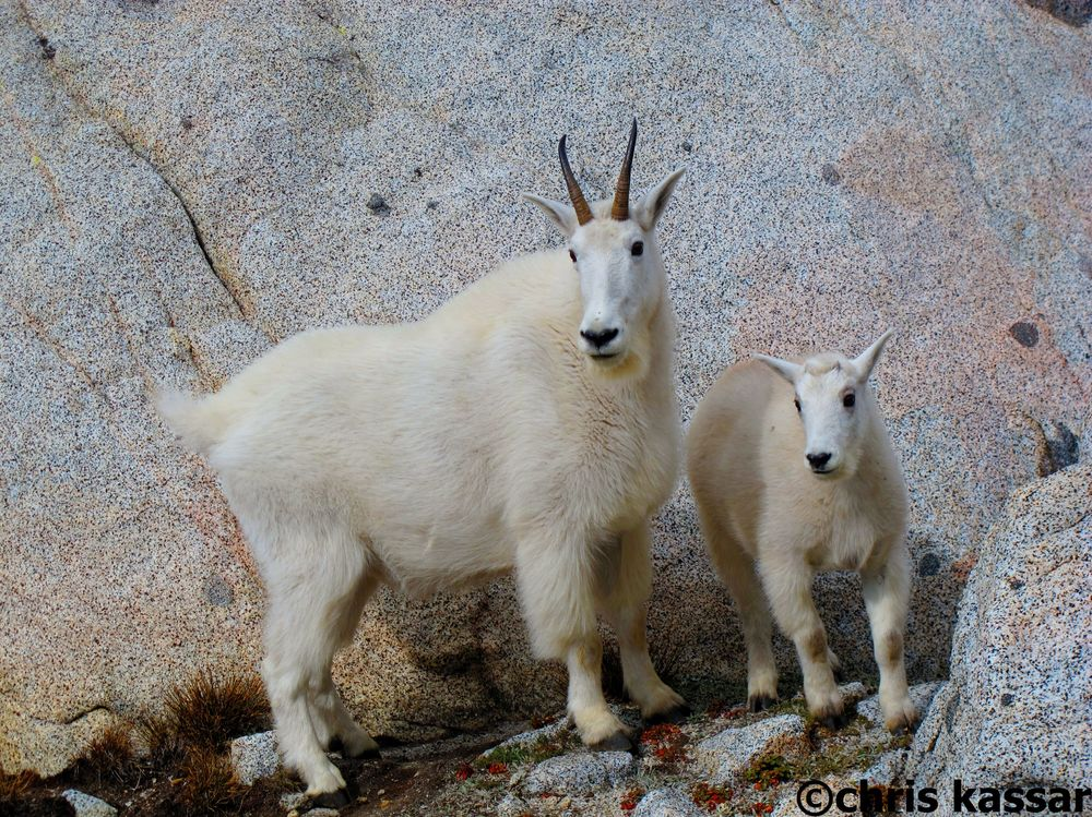goats_enchantments_WA.jpg