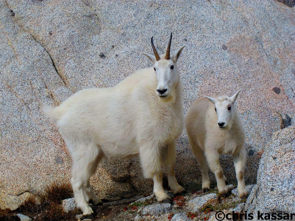 goats_enchantments_WA.jpg