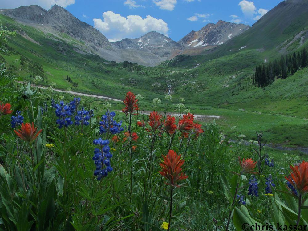 meadow_scenic.jpg
