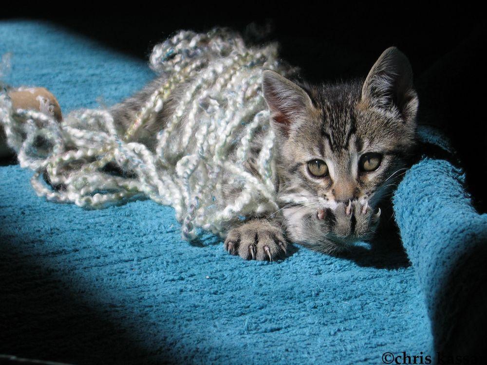 evil_kitty.jpg