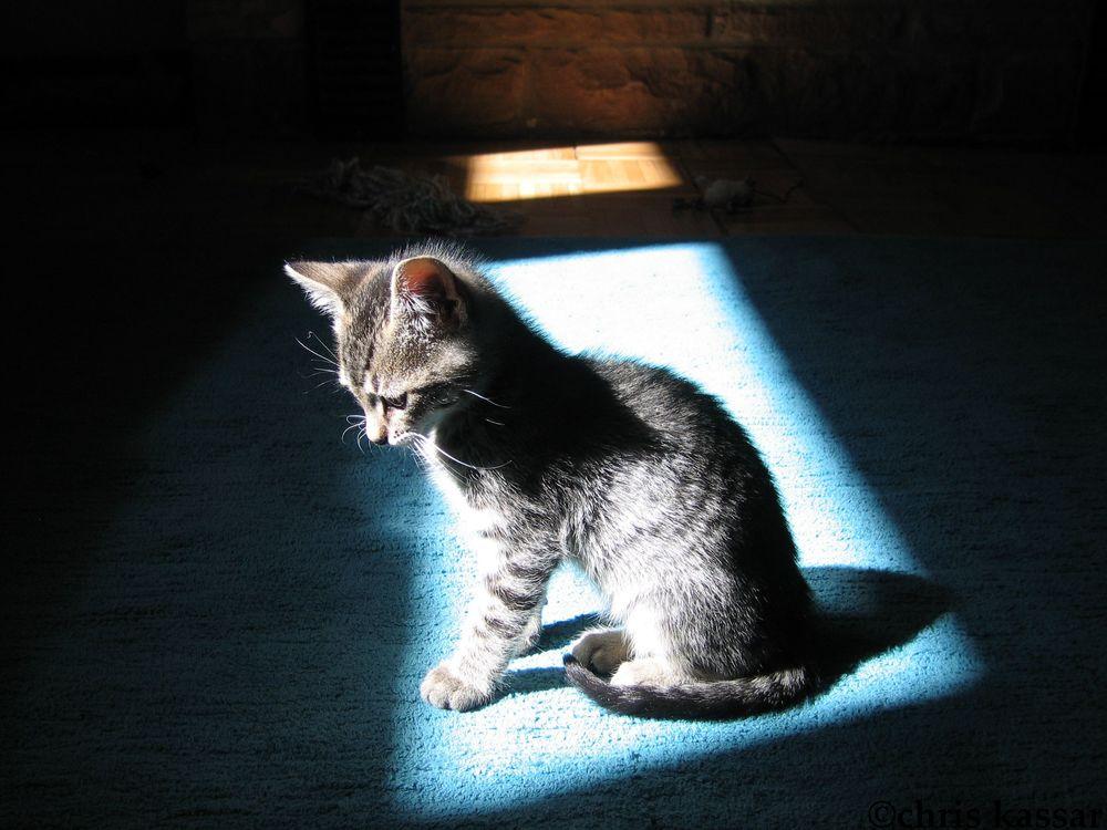 sweet_kitty.jpg