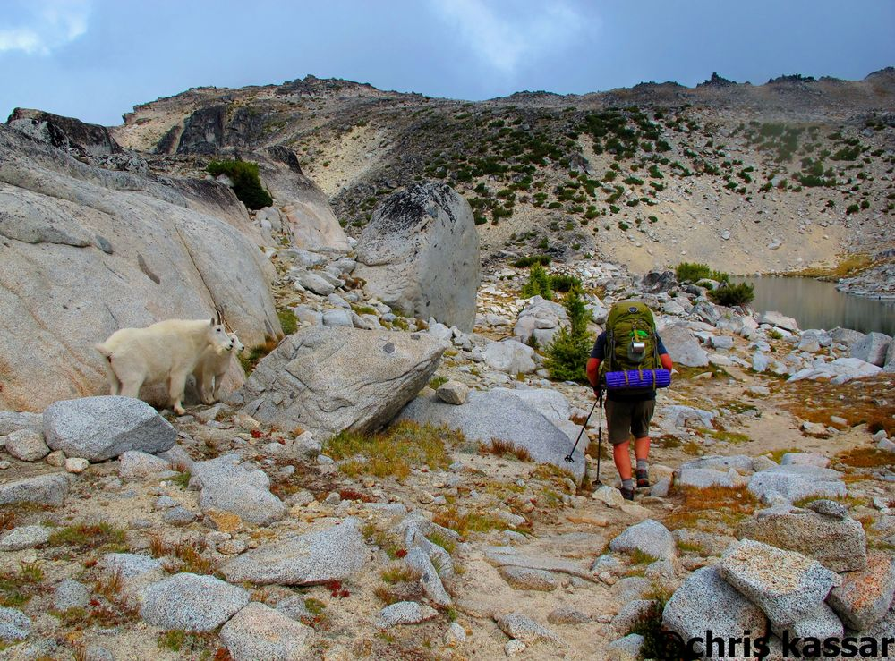 Enchantment_Lakes_WA_Goats.jpg