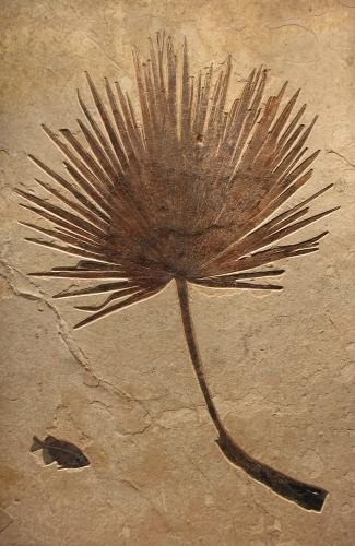 Palm-Phareodus-fossil-art-mural~Q100909006gm.jpg