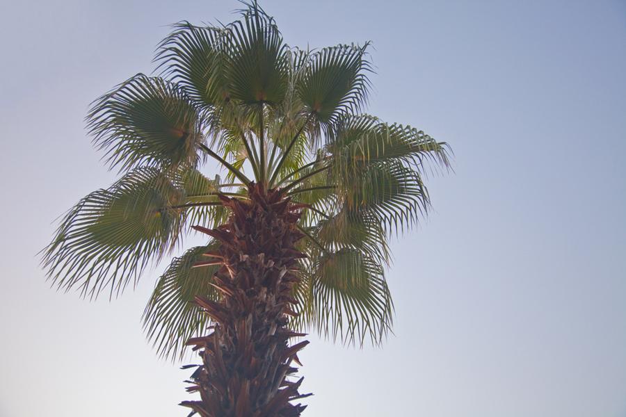 17_trees04_o.jpg