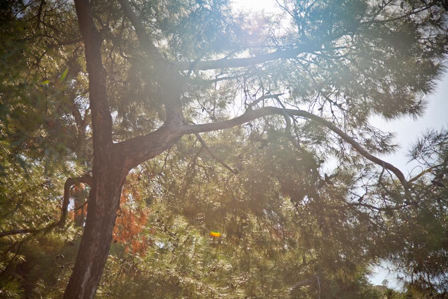17_trees05_o.jpg