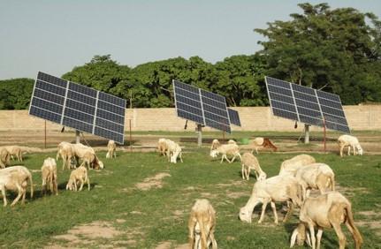 solar sheep.jpg