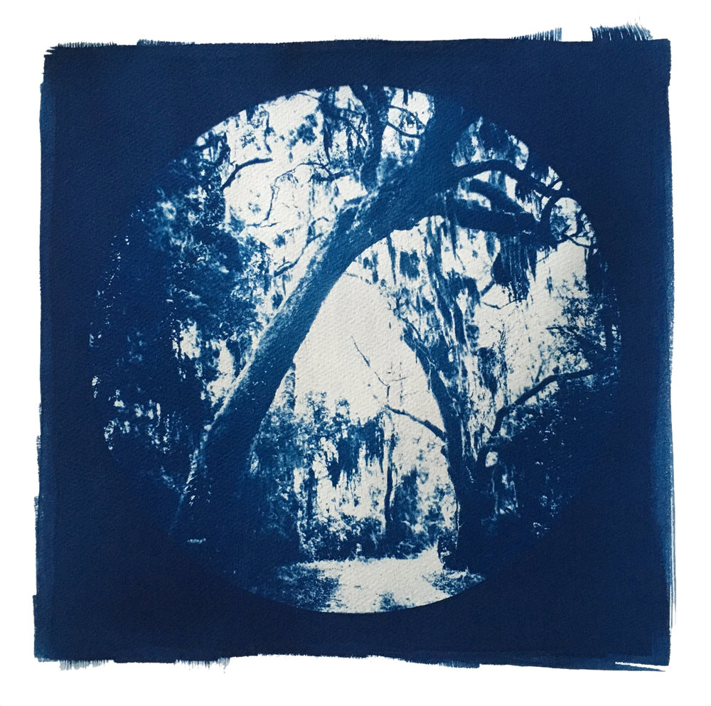 "TITLE /  Partner With the Sun No. 3  MEDIUM /  Cyanotype Print, Printed on 100% Cotton Paper  SIZE /  15.25"" x 15.25""  PRICE /  $400.00"