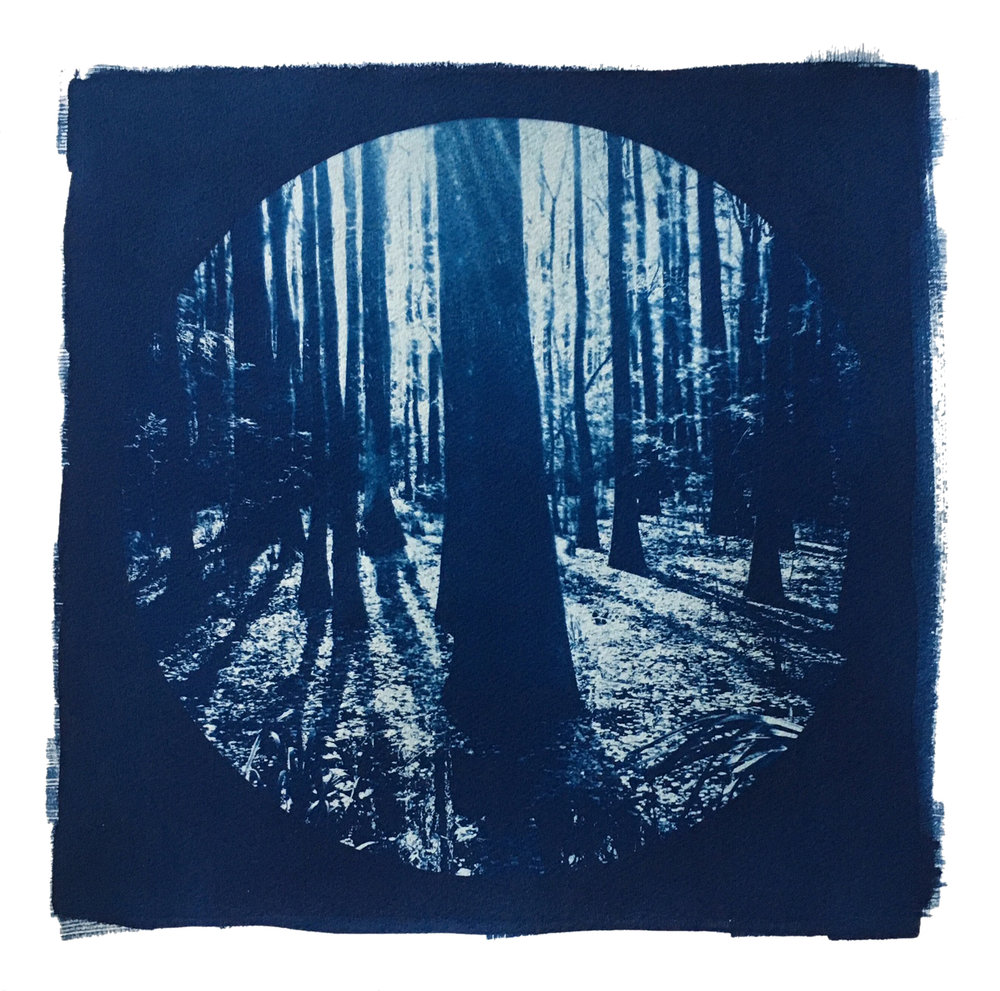 "TITLE /  Partner With the Sun No. 4  MEDIUM /  Cyanotype Print, Printed on 100% Cotton Paper  SIZE /  15.25"" x 15.25""  PRICE /  $400.00"