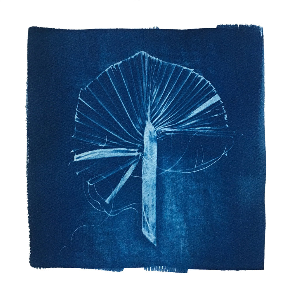 "TITLE /  Sabal Minor Fan  MEDIUM /  Cyanotype Print, Printed on 100% Cotton Paper  SIZE /  9"" x 9""  PRICE /  $275.00"