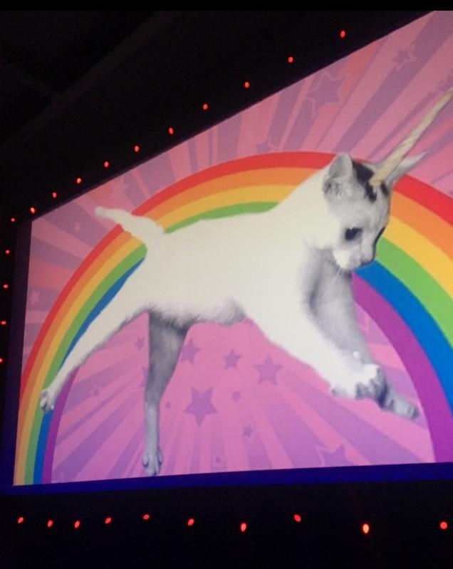 cat_rainbow.jpg