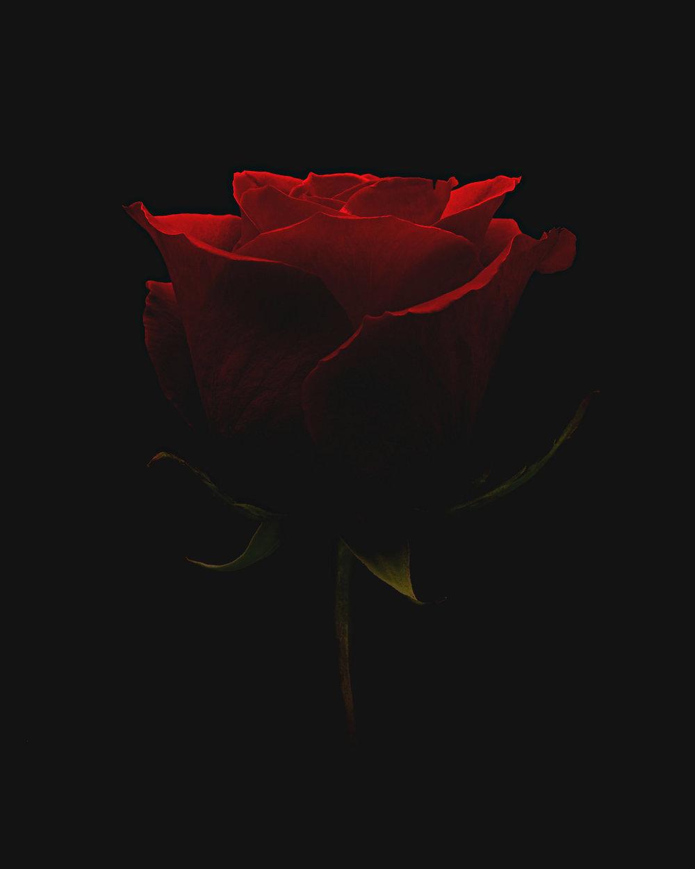 Rose-final copy.jpg