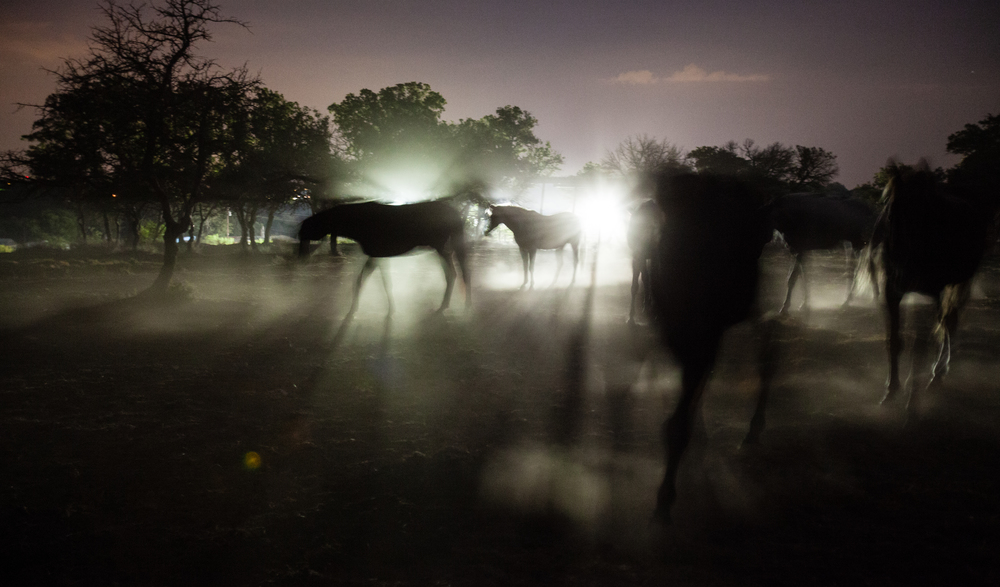 Herd in the Night
