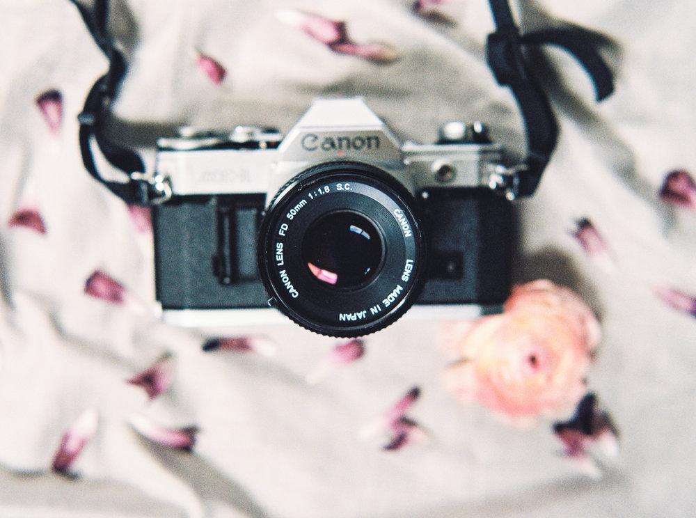 camera and petals-1.jpg