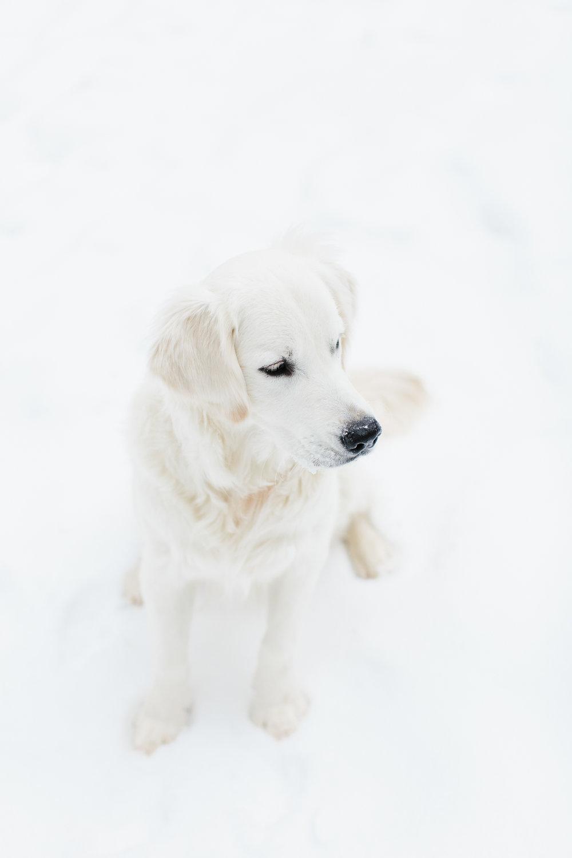 160122-SNOWDAY-9.jpg