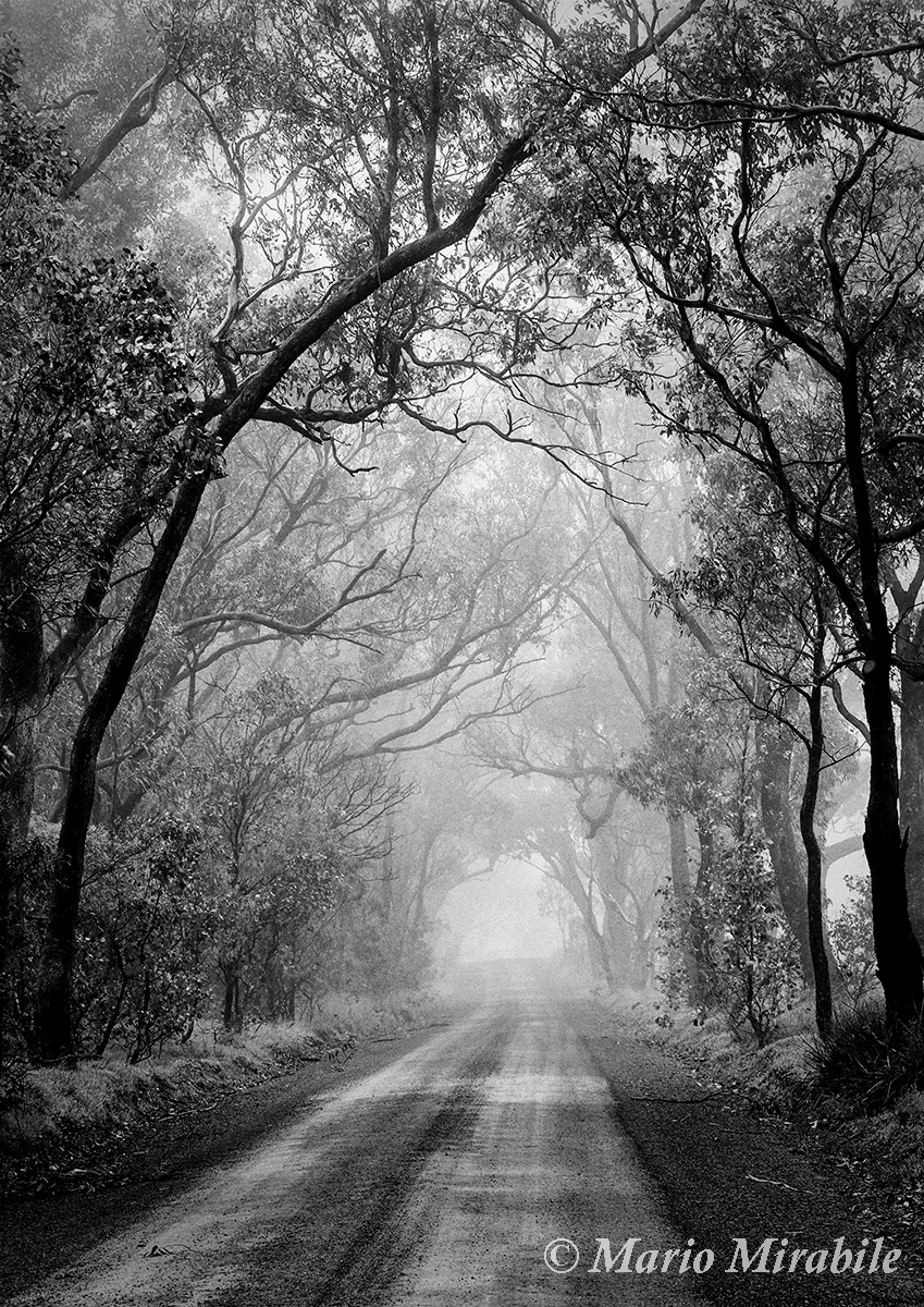 Misty road copy.jpg