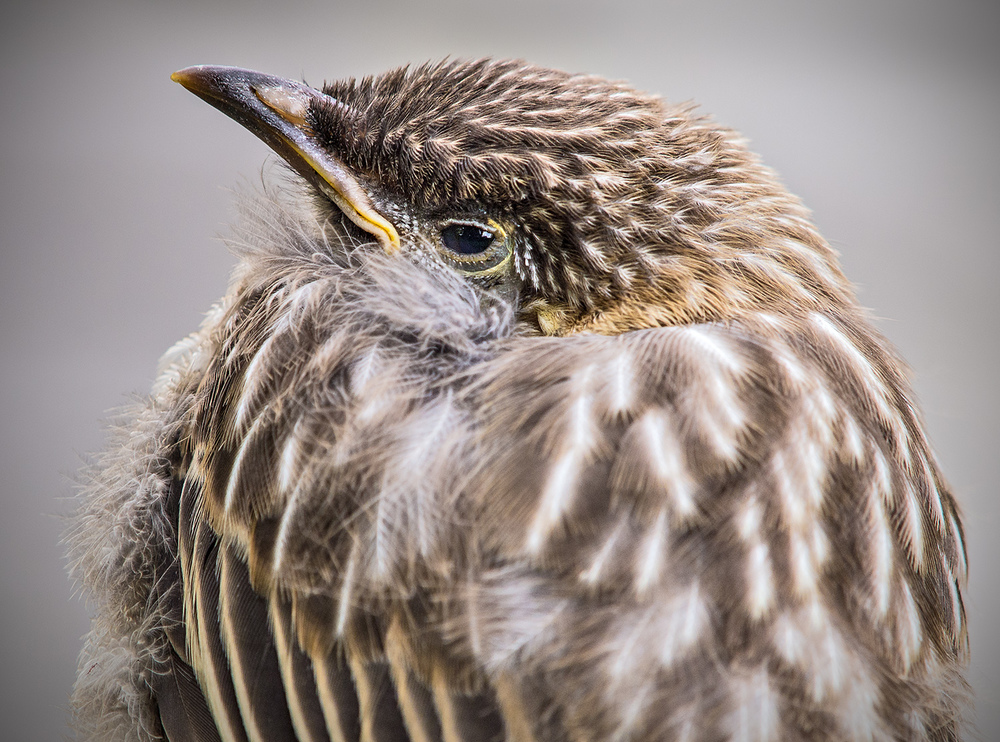 fledgling 1.jpg