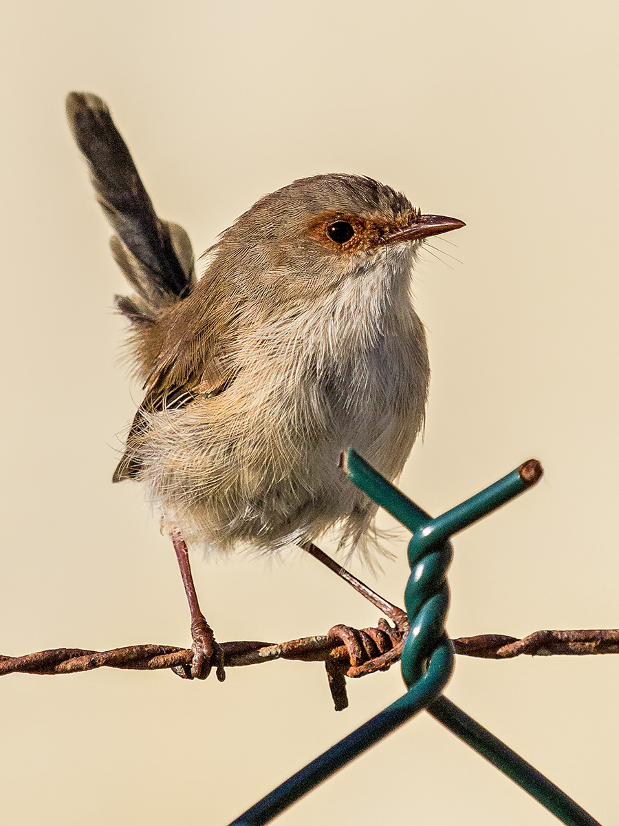 20140314 Sandy Point Birds (20).jpg