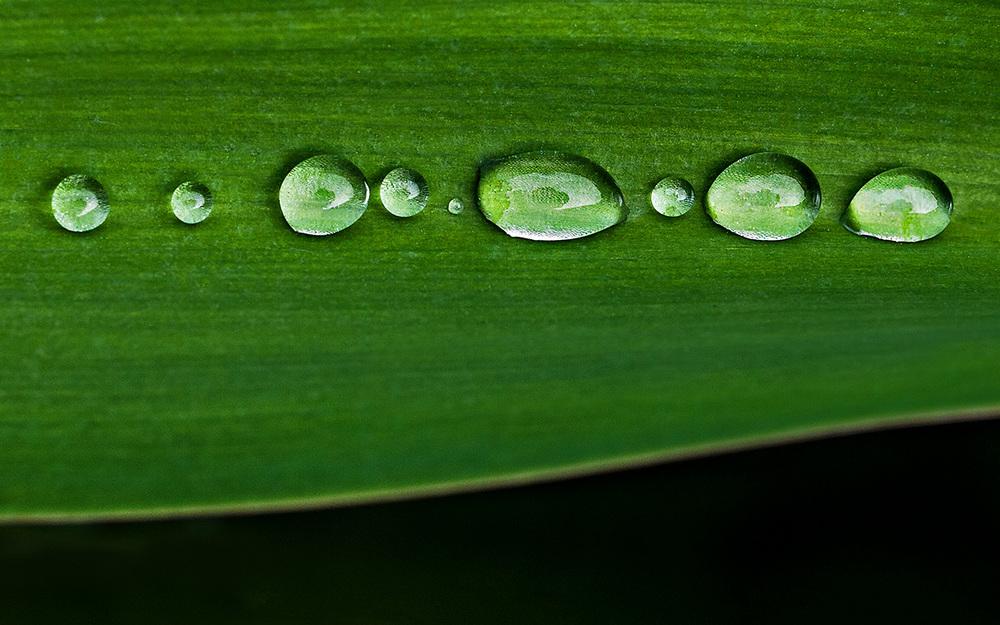20140529 Green (21).jpg