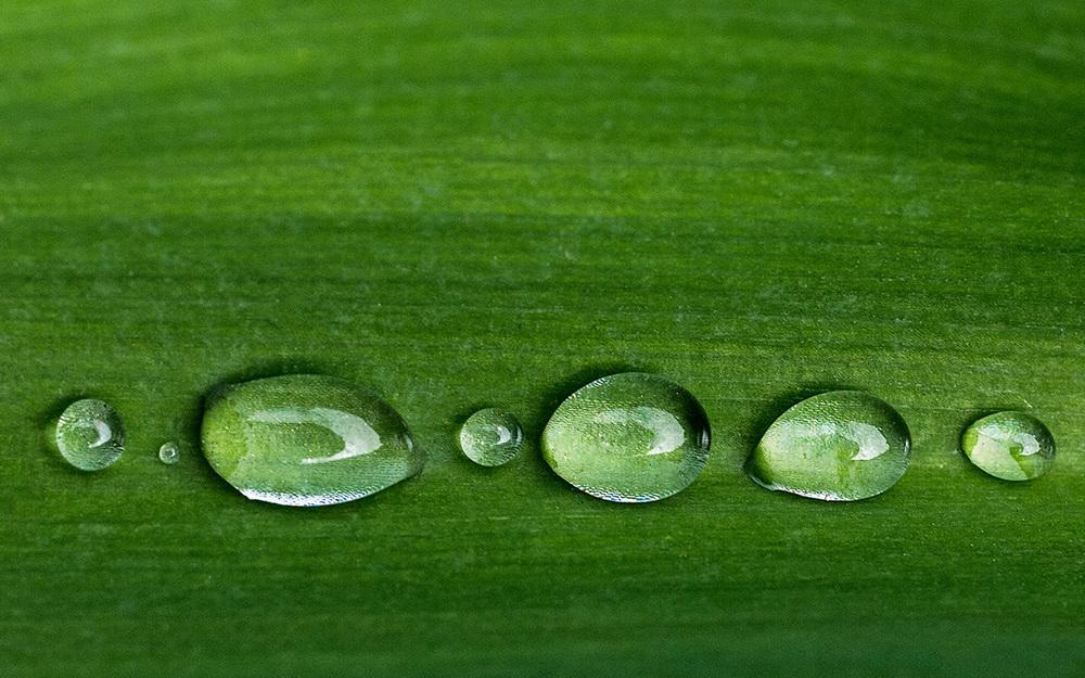 20140529 Green (25).jpg