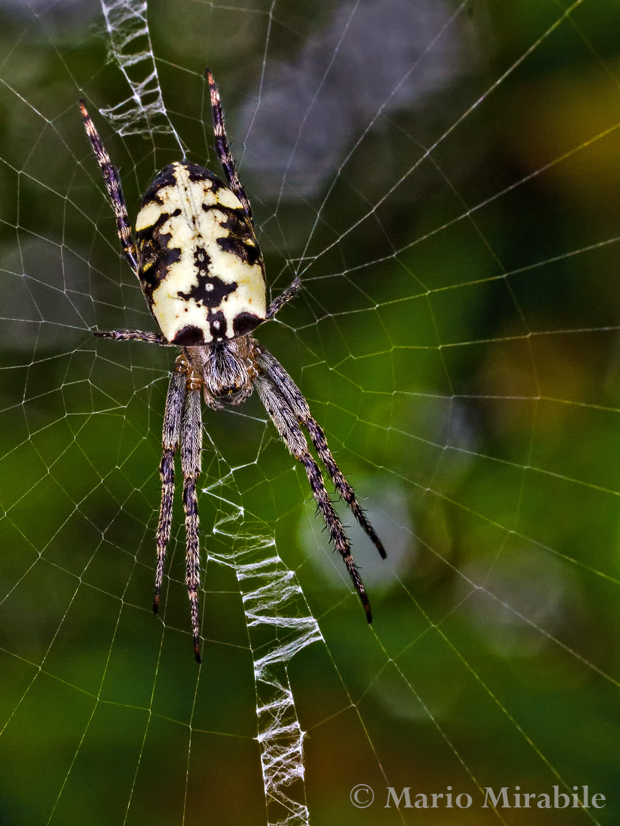 20140514 Spider (7) copy.jpg