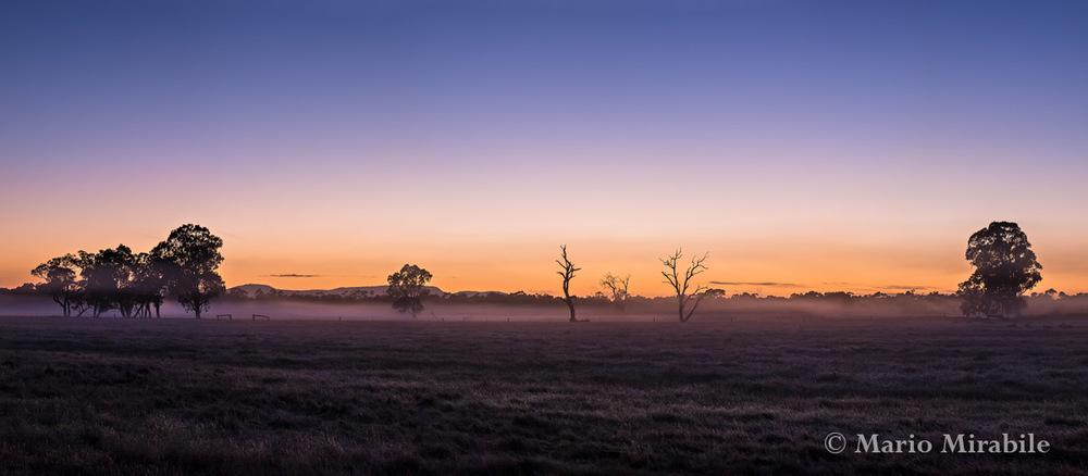 Dawn mist copy.jpg