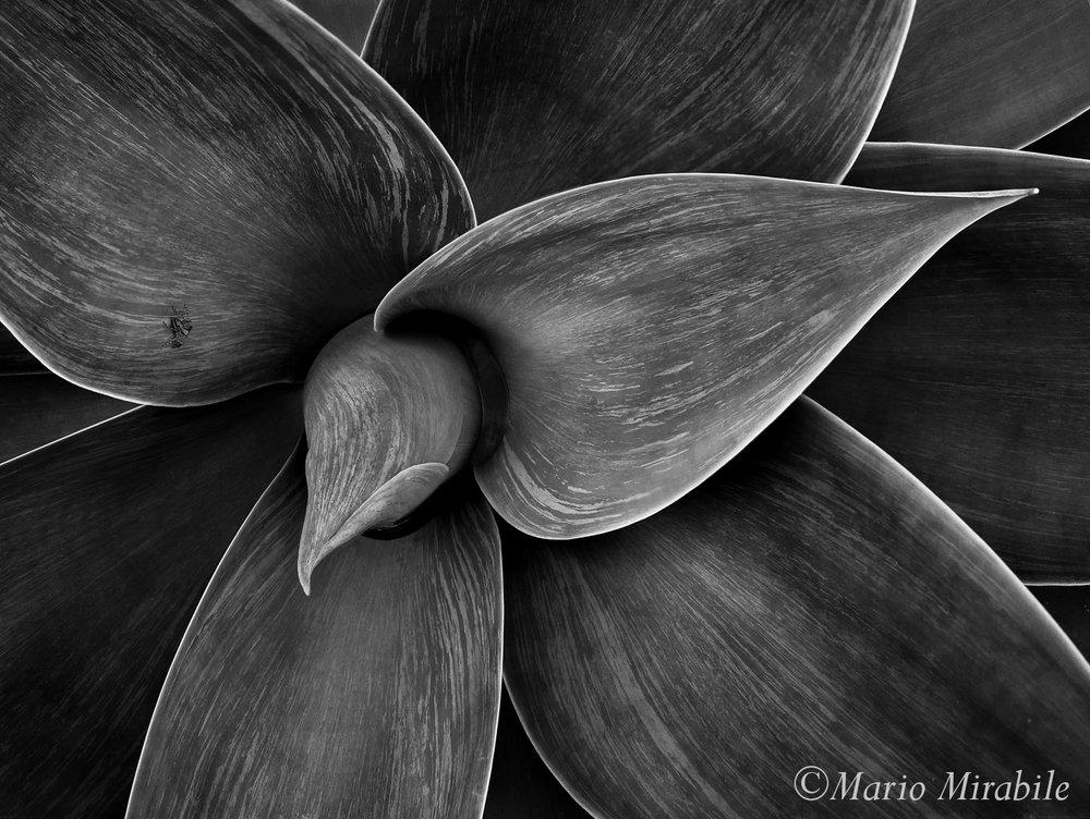 Plant copy.jpg