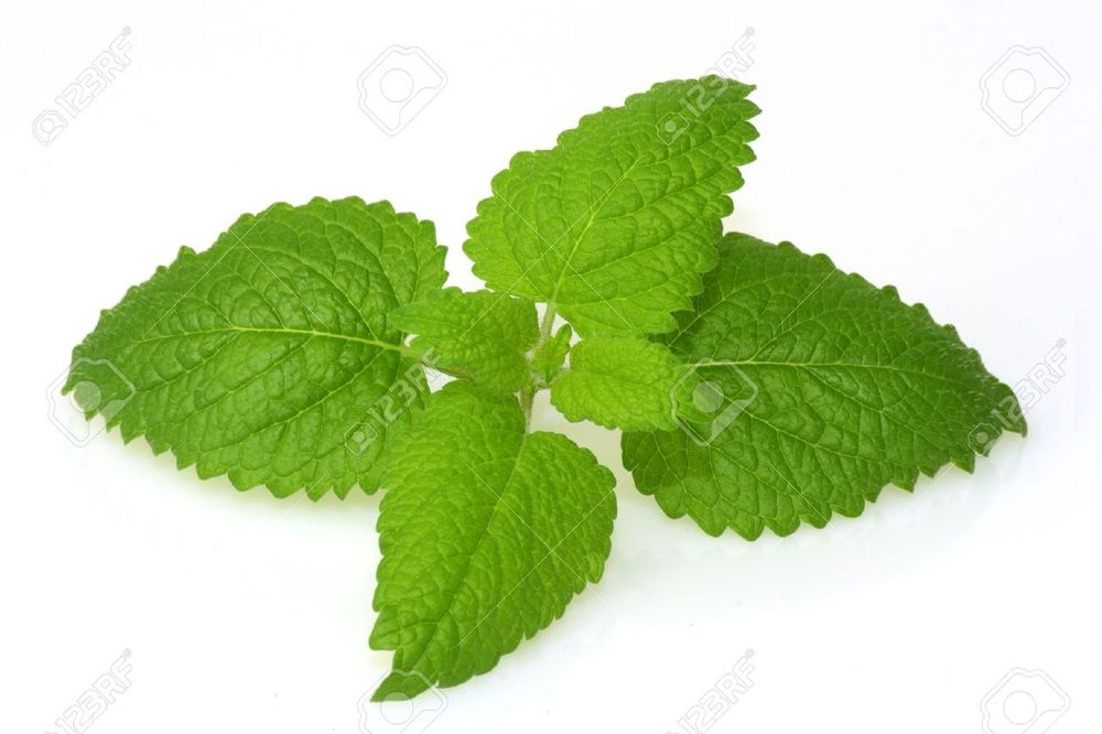 4615111-Lemon-balm-on-bright-background--Stock-Photo.jpg