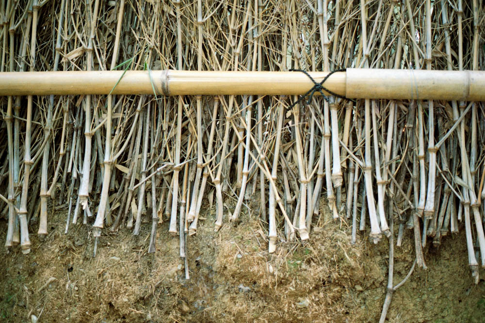 The fences in the bamboo grove are made of... bamboo!