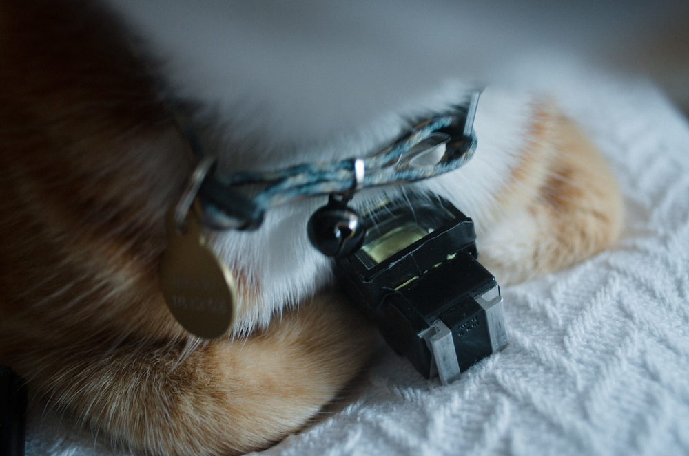 This viewfinder is Hikari-The-Cat-approved.
