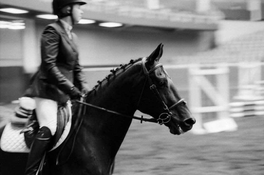 Elegance of Horses-2.jpg