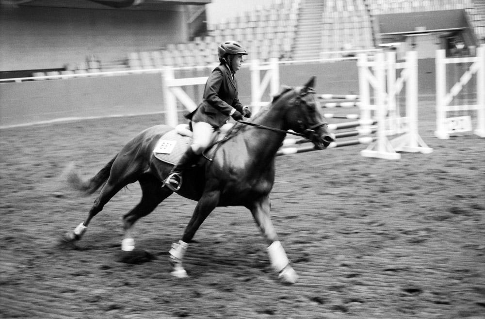 Elegance of Horses-1.jpg