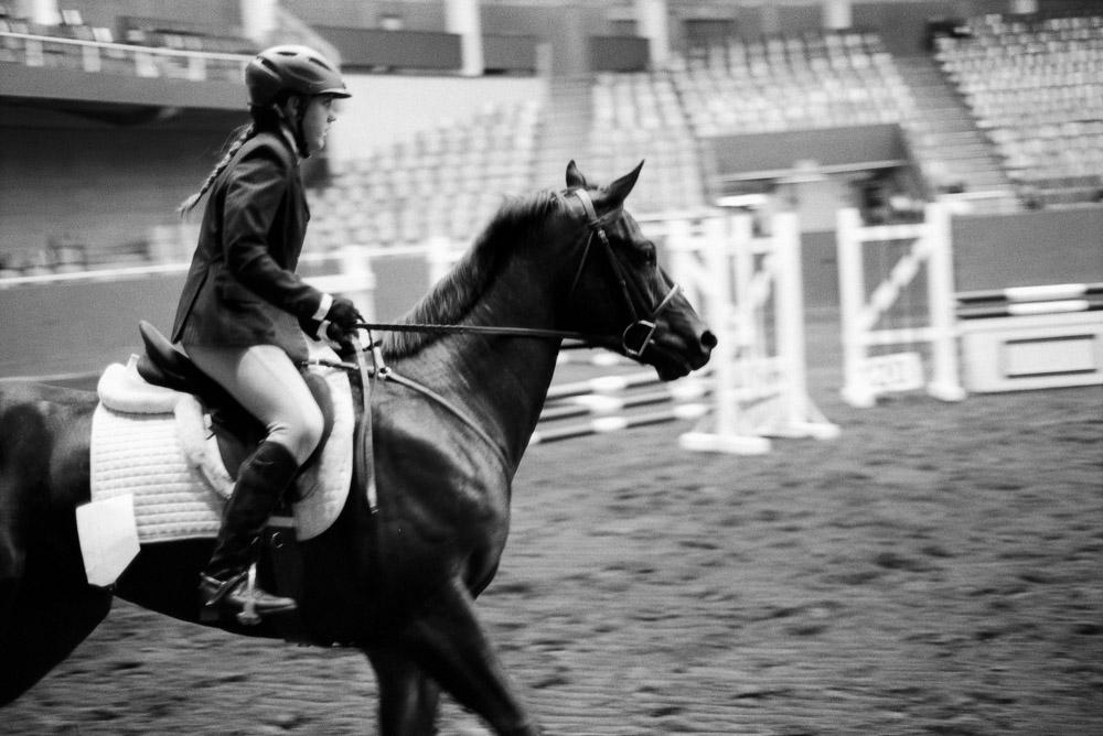 Elegance of Horses-4.jpg