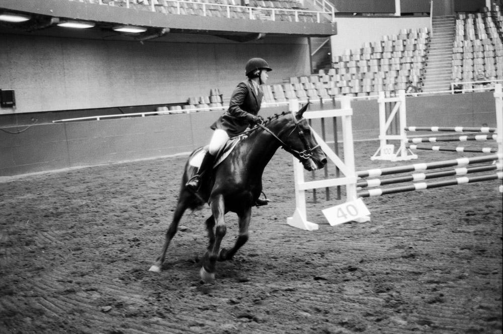 Elegance of Horses-3.jpg