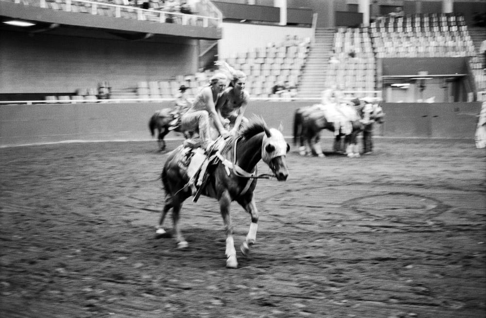 Elegance of Horses-7.jpg