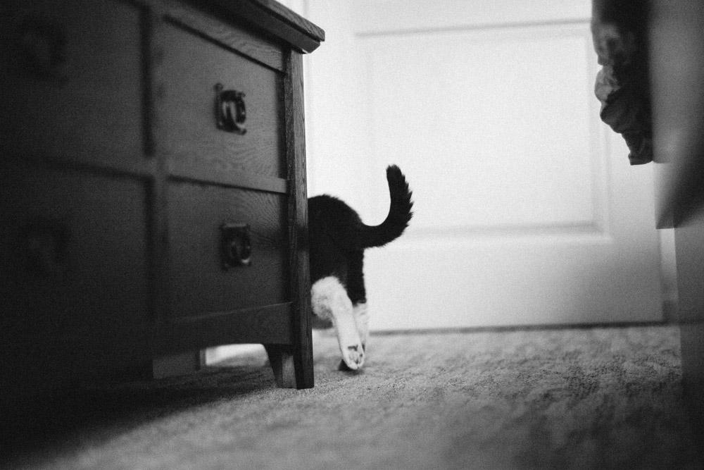 Tallie The Cat-14.jpg