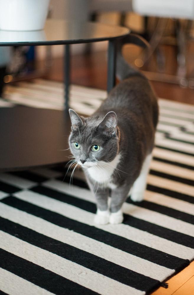 Tallie The Cat-15.jpg
