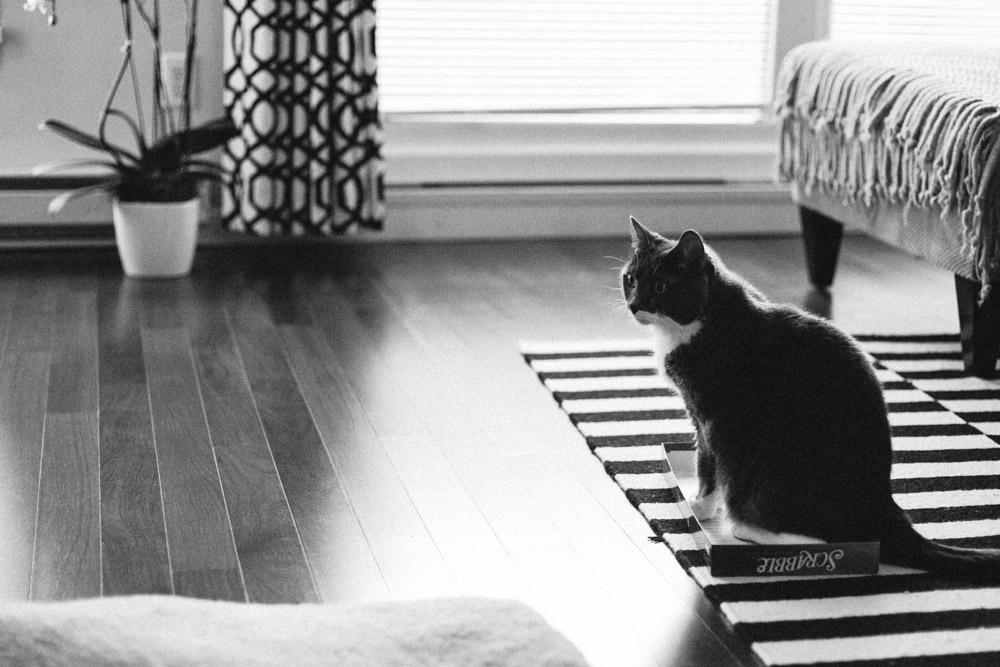 Tallie The Cat-22.jpg