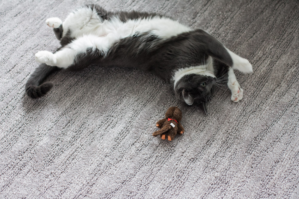 Tallie The Cat-29.jpg